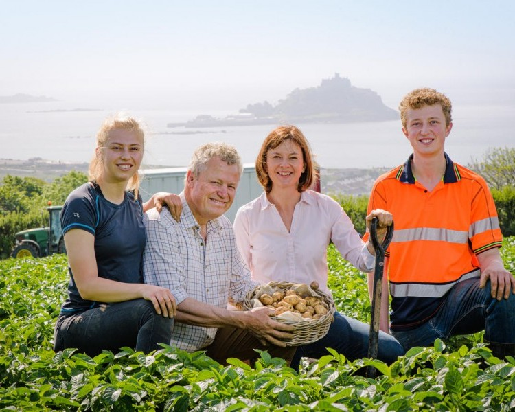 Cornish New potatoes: Planting, growing and harvesting in the South West